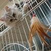 子猫と一緒に暮らし始めて1ヶ月!「猫はこんなにかわいいぞ!」を熱く語る