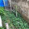 戦慄の植物生命体