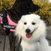 甲斐犬サン、マコと共に年賀状作成へ挑む!の巻〜何ソレ、美味シイノψ(`∇´)ψ