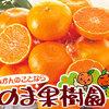 松山でハウスみかんを買うならのま果樹園!
