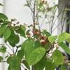 コスパ良し、種まきと挿し木で花壇の花を増やしたい♪ タツミプランニングの注文住宅
