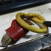 イグニッションコイル一体式発電コイル