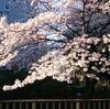 GW、メールの山です。(いまさらながら…桜まとめ)