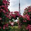 ラティアス、東京タワーから薔薇のアーチへ。【ポケモンGOAR写真】Go Create Challenge