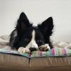 犬と理想的な生活を送るためには努力が必要