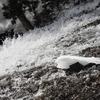 奥日光三名瀑の一つ湯滝の激流を撮る。