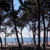 彫刻放浪:稲毛海岸・稲毛海浜公園