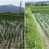 新しい溝切り機と中耕除草と残照