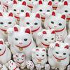 豪徳寺で大量の招き猫に囲まれてきた
