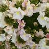 春待つ植物たち