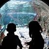 【悪天候に】ショッピングモールの中の水族館【SEA LIFE Val d'Europe】