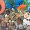 レッドチェリーシュリンプ水槽、砂利からソイルへ