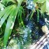 武田神社の湧き水✴︎アチューメント・ヒーリングの募集