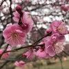 神代植物公園では梅が咲きはじめているよ!