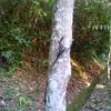 ジョギング中に黒くて大きな虫が・・