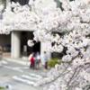 【合格体験記】大阪大学外国語学部に現役合格したもり さんの受験勉強とは?
