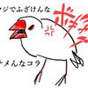 文鳥がかわいすぎる!育て方のコツや魅力を語る