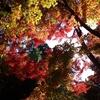 女心と秋の空?