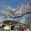 近所のありふれた神社とありふれたソメイヨシノ