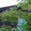 我が家の庭の観察記録⑨&草むしり③