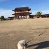 【奈良】かつての都を感じながら愛犬とのびのびさんぽ。平城宮跡朱雀門ひろば