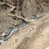 ネパールのハゲワシ on アンナプルナサーキット Vultures in Kagbeni Mustang