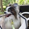 犬の結膜炎。老犬2匹の病院通い~
