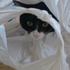 今日の黒猫モモ&白黒猫ナナの動画ー1009
