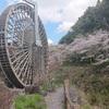鹿児島の桜写真集