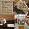 「石の博物誌」恋路海岸の霰石