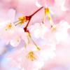 ◆乳がん検診の、結果…🌸