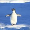 映画『ペンギン・ハイウェイ』感想と考察!大人向けのファンタジー映画でした!【ちょっとネタバレ】