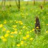 黄色い花畑とタケノコ♪