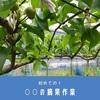 梨の栽培作業を手伝いながら梨の奥深さを学ぶ
