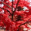 【アラ還さんぽ】今年最高の紅葉は動画でお楽しみください(世田谷九品仏)。