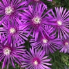 花咲く日が遠い遠い日本-46;分科会は責任を取る覚悟がないのか?