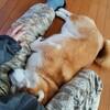 ペットは飼い主に似ると言うけれど。