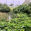 丸山総合公園のスイレン池(富山県上市)