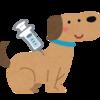 犬のフィラリア予防。時期と薬について。