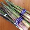 🎋アスパラ?筍?笹の若芽の根曲り竹