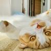 【猫学】愛猫と過ごした2年間の中でやめたことをシェアします。