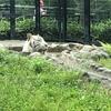 課外プログラムで動物園に行って来ました