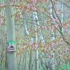 巣箱と山桜と母の日と