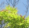 近場の新緑