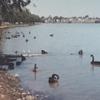毎日更新 1983年 バックトゥザ 昭和58年12月18日 オーストラリア一周 バイク旅 177日目 中古品市 自由市場  23歳 大陸横断 ヤマハXS250  ワーキングホリデー ワーホリ  タイムスリップブログ シンクロ 終活