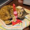 2月後半の #ねこ #cat #猫 どらやきちゃんA