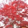 【紅葉】昭和記念公園に行ってきた(後編)