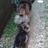 うちの犬たち