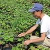 鹿児島の安納芋農家さん
