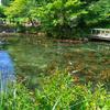 モネの池(岐阜県)はデートにもおすすめ!口コミやアクセス情報